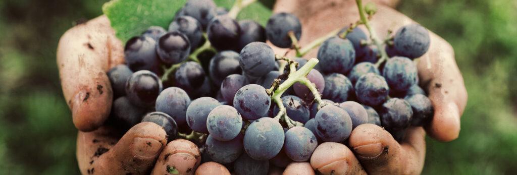 Urgence bio vin